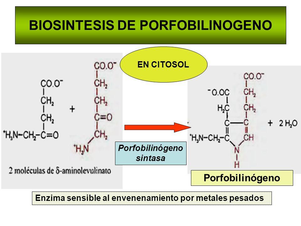 BIOSINTESIS DE PORFOBILINOGENO