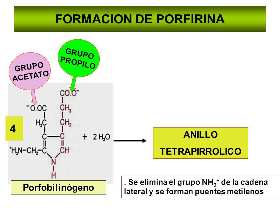 FORMACION DE PORFIRINA