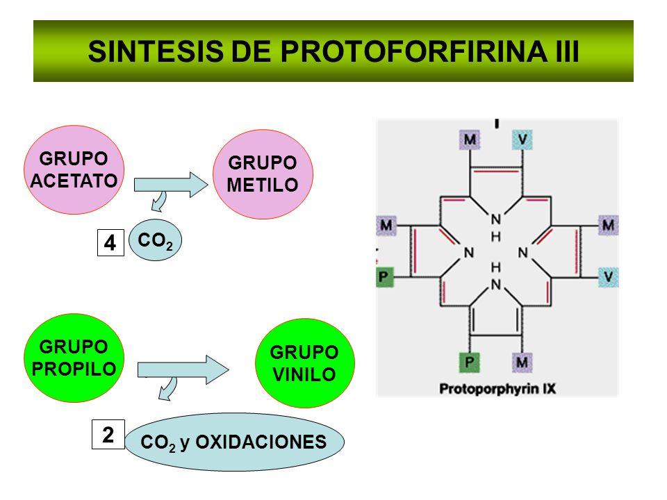SINTESIS DE PROTOFORFIRINA III