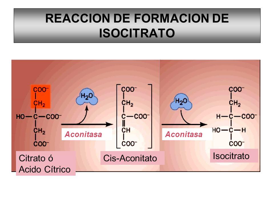 REACCION DE FORMACION DE ISOCITRATO