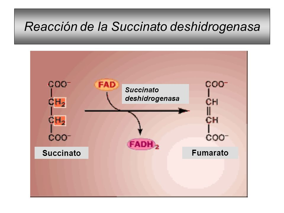 Reacción de la Succinato deshidrogenasa