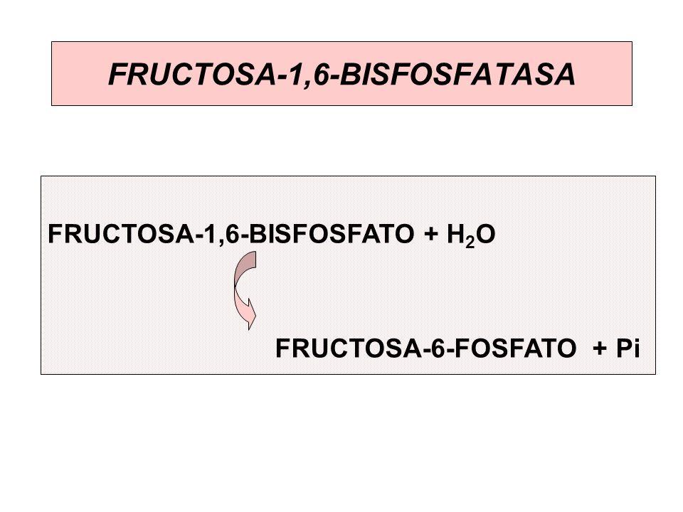 FRUCTOSA-1,6-BISFOSFATASA