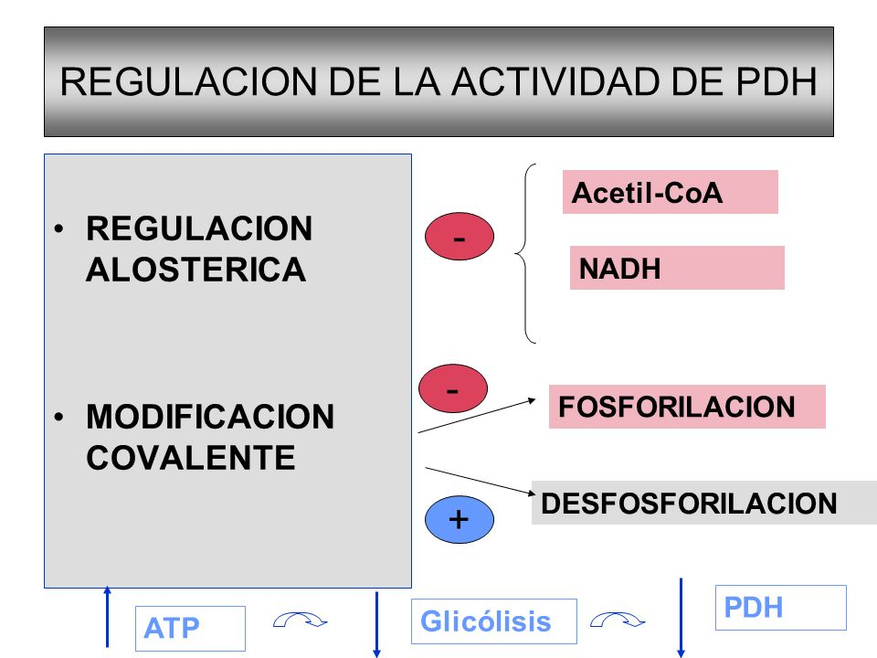 REGULACION DE LA ACTIVIDAD DE PDH
