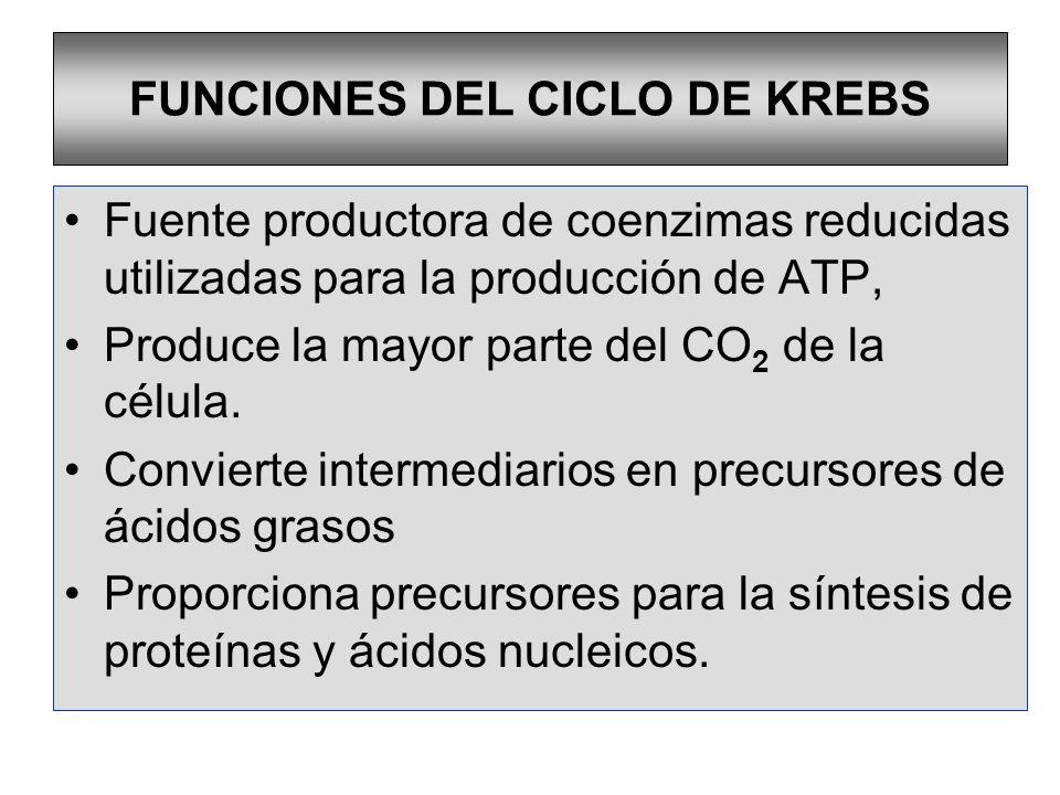 FUNCIONES DEL CICLO DE KREBS
