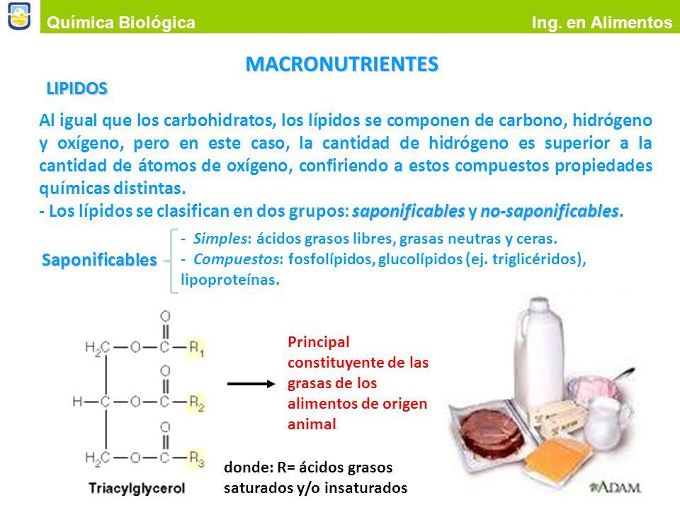 MACRONUTRIENTES LIPIDOS