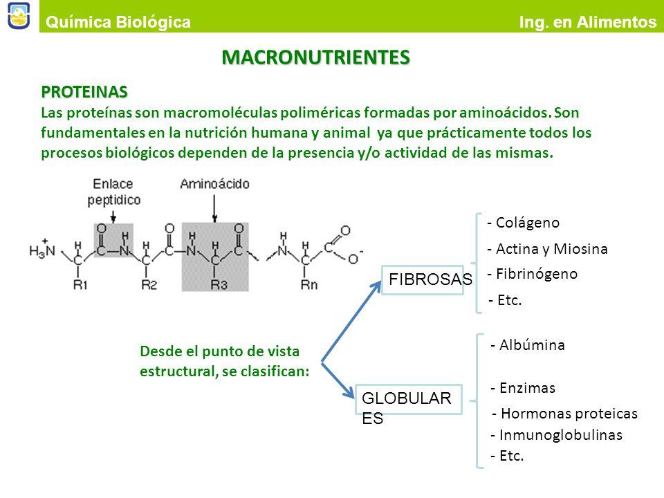 MACRONUTRIENTES PROTEINAS Química Biológica Ing. en Alimentos