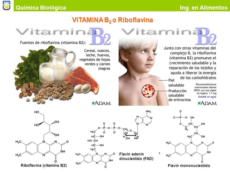 VITAMINA B2 o Riboflavina