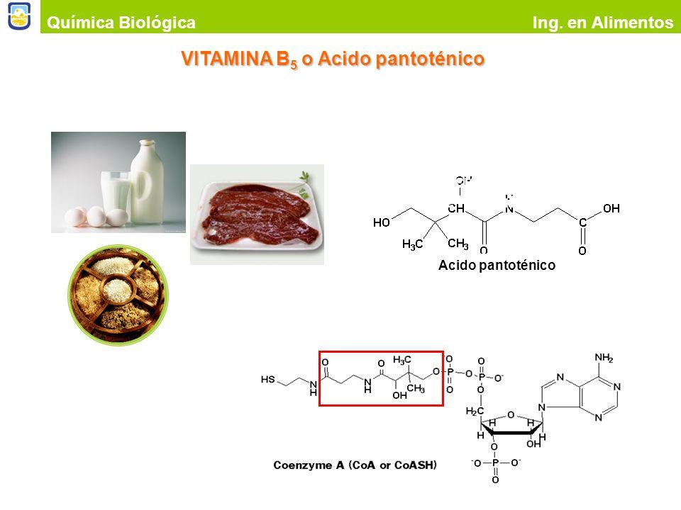 VITAMINA B5 o Acido pantoténico