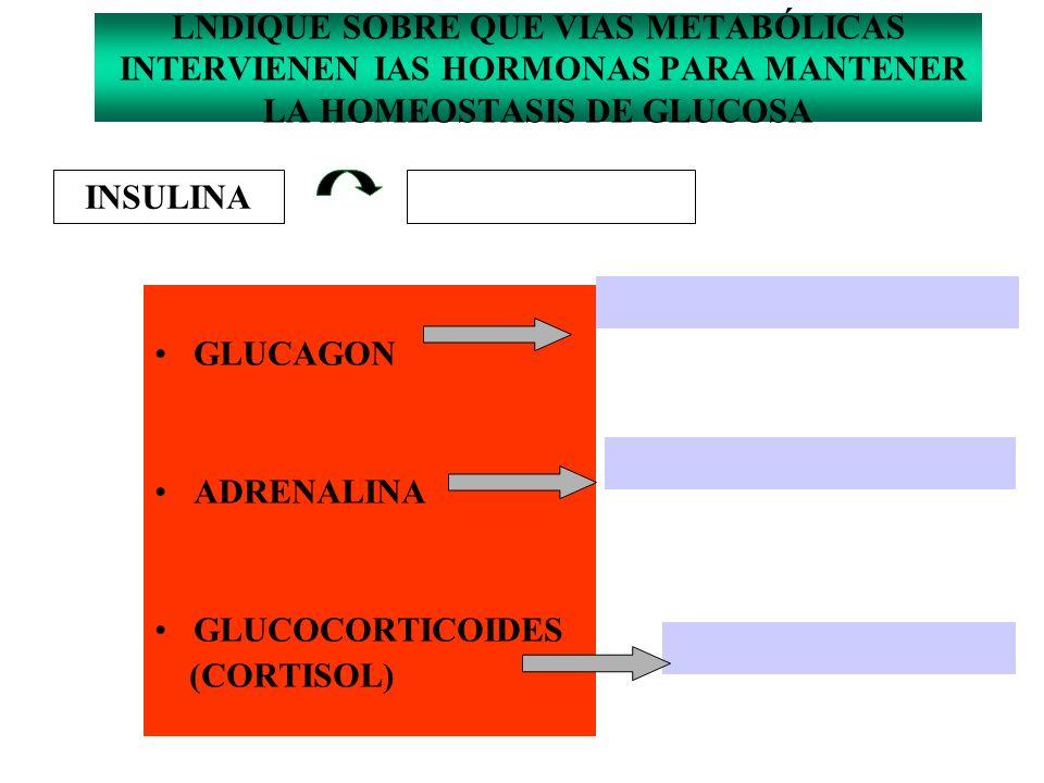 LNDIQUE SOBRE QUE VIAS METABÓLICAS INTERVIENEN IAS HORMONAS PARA MANTENER LA HOMEOSTASIS DE GLUCOSA