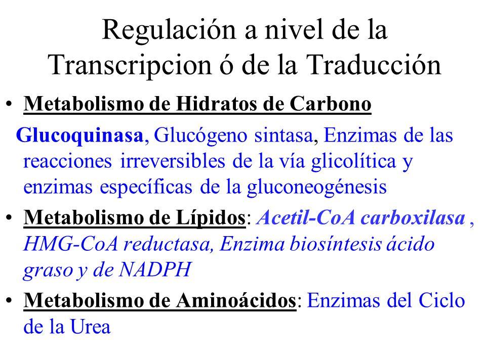 Regulación a nivel de la Transcripcion ó de la Traducción