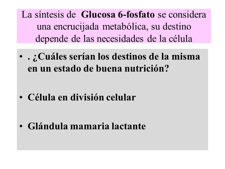 La síntesis de Glucosa 6-fosfato se considera una encrucijada metabólica, su destino depende de las necesidades de la célula