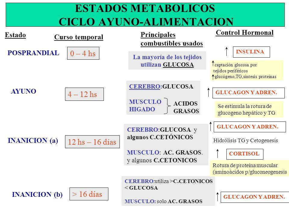 ESTADOS METABOLICOS CICLO AYUNO-ALIMENTACION