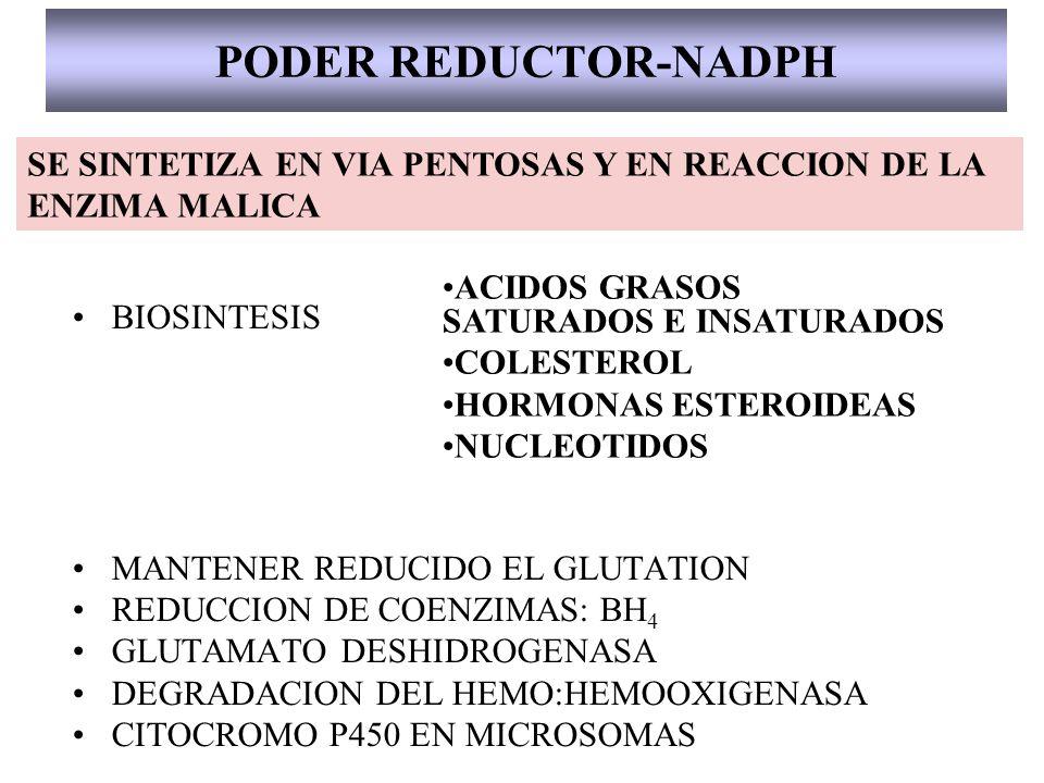 PODER REDUCTOR-NADPH SE SINTETIZA EN VIA PENTOSAS Y EN REACCION DE LA ENZIMA MALICA. ACIDOS GRASOS SATURADOS E INSATURADOS.
