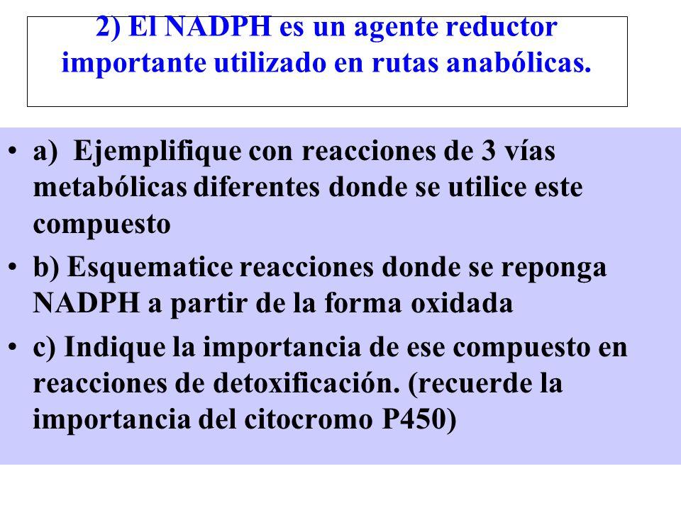 2) El NADPH es un agente reductor importante utilizado en rutas anabólicas.