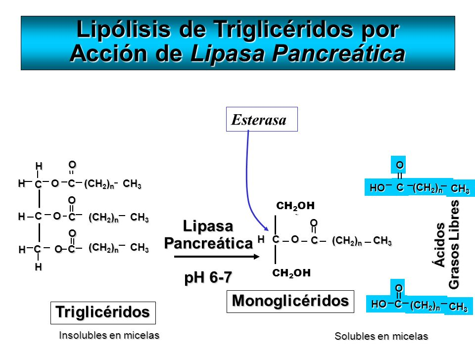 Lipólisis de Triglicéridos por Acción de Lipasa Pancreática