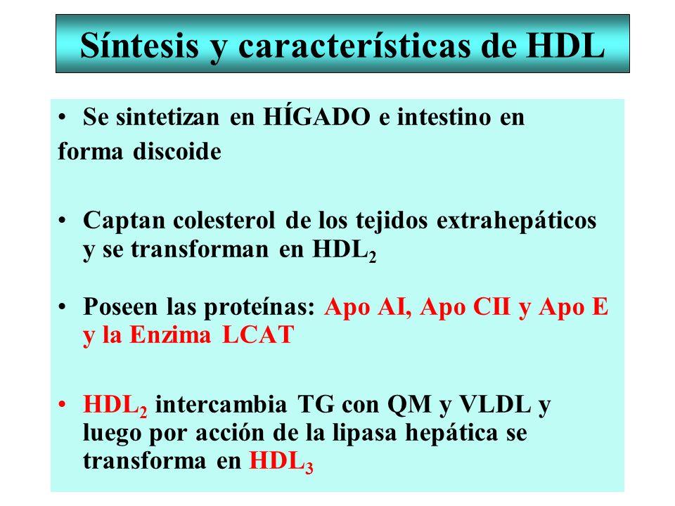 Síntesis y características de HDL