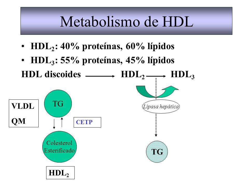 Metabolismo de HDL HDL2: 40% proteínas, 60% lípidos