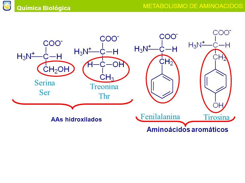Serina Treonina Ser Thr Fenilalanina Tirosina Aminoácidos aromáticos