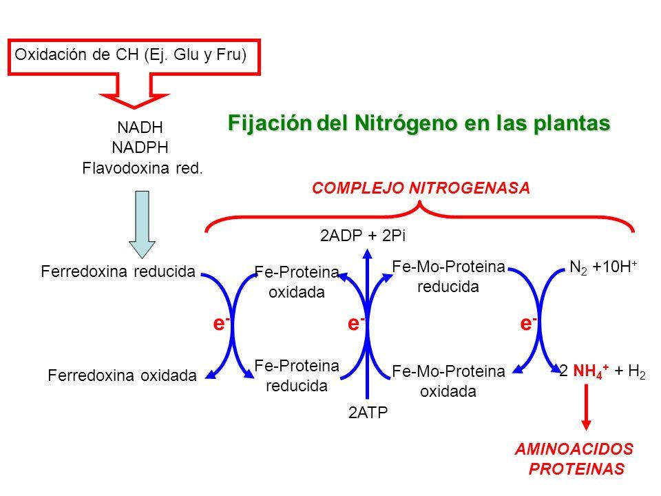 Fijación del Nitrógeno en las plantas