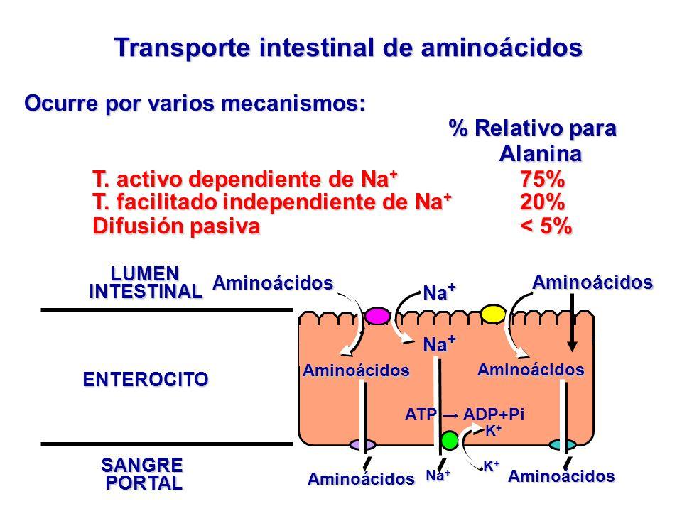 Transporte intestinal de aminoácidos