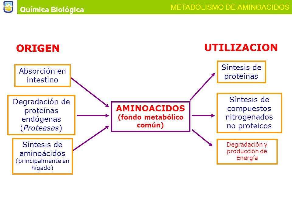 AMINOACIDOS (fondo metabólico común)