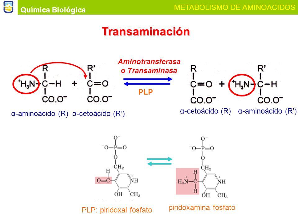 Aminotransferasa o Transaminasa