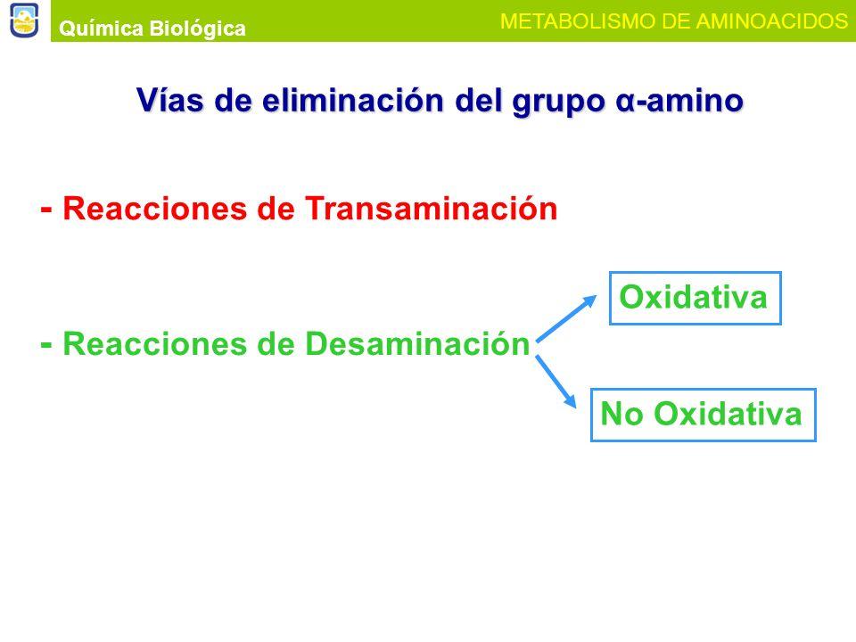 Vías de eliminación del grupo α-amino
