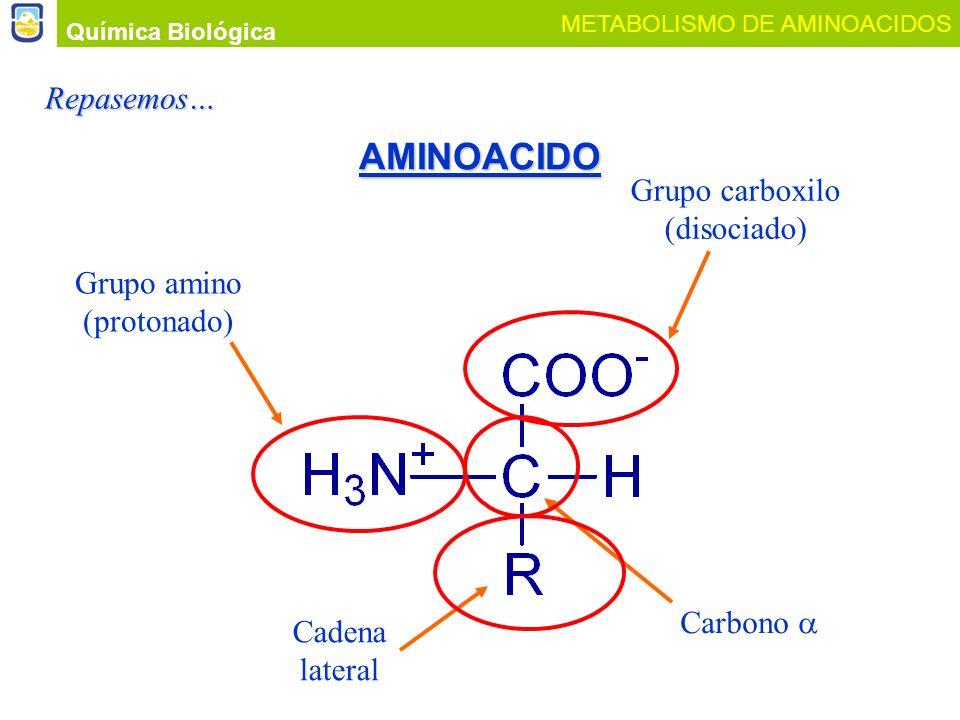 AMINOACIDO Repasemos… Grupo carboxilo (disociado) Grupo amino
