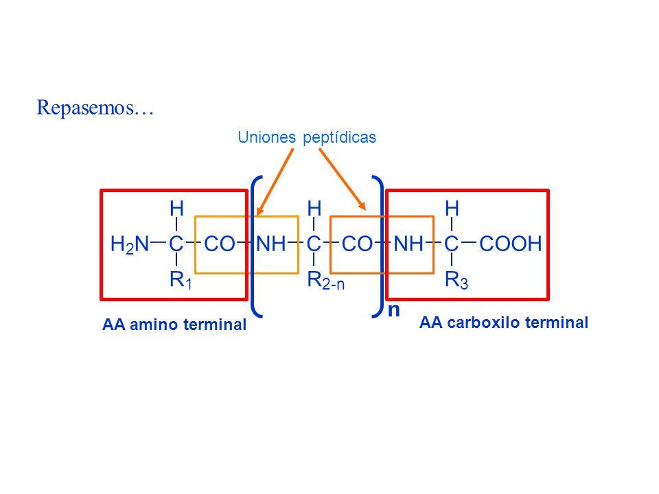 Repasemos… n H N C R O Uniones peptídicas AA amino terminal