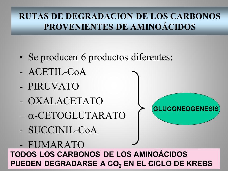 RUTAS DE DEGRADACION DE LOS CARBONOS PROVENIENTES DE AMINOÁCIDOS