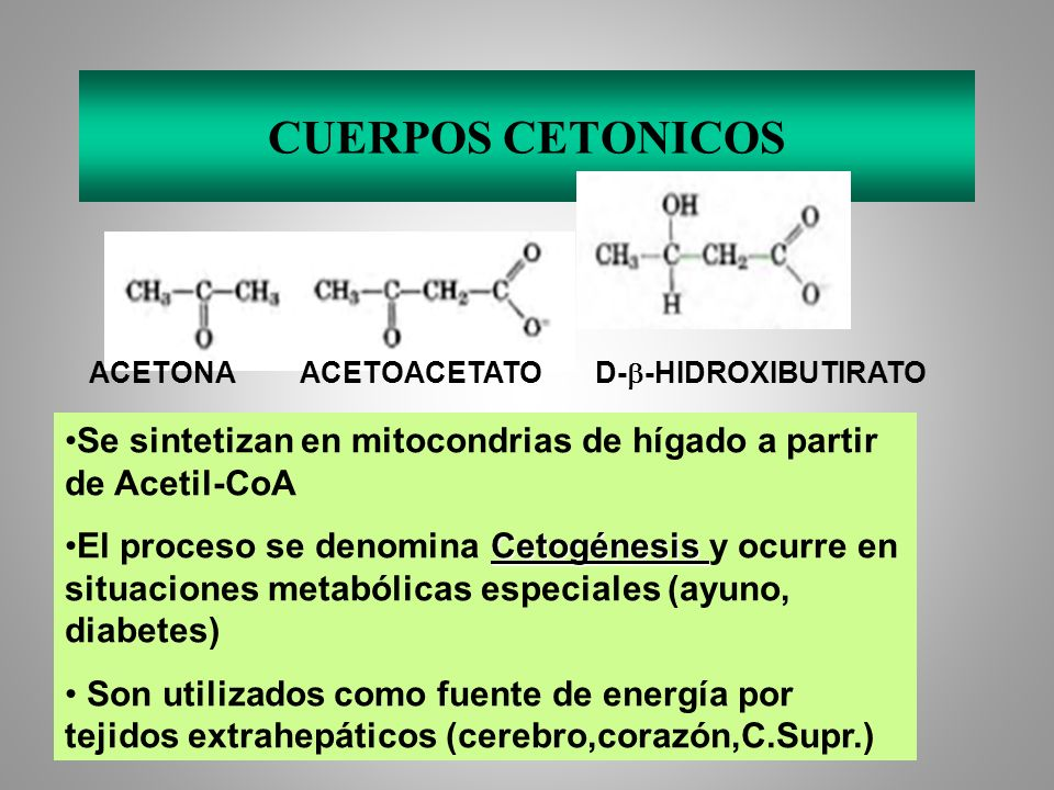 CUERPOS CETONICOSACETONA ACETOACETATO D-b-HIDROXIBUTIRATO. Se sintetizan en mitocondrias de hígado a partir de Acetil-CoA.