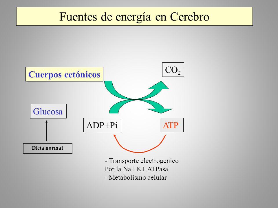 Fuentes de energía en Cerebro