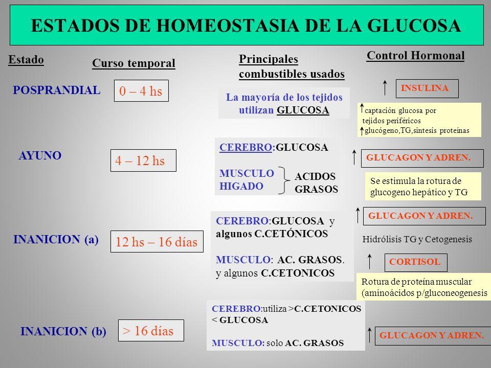 ESTADOS DE HOMEOSTASIA DE LA GLUCOSA