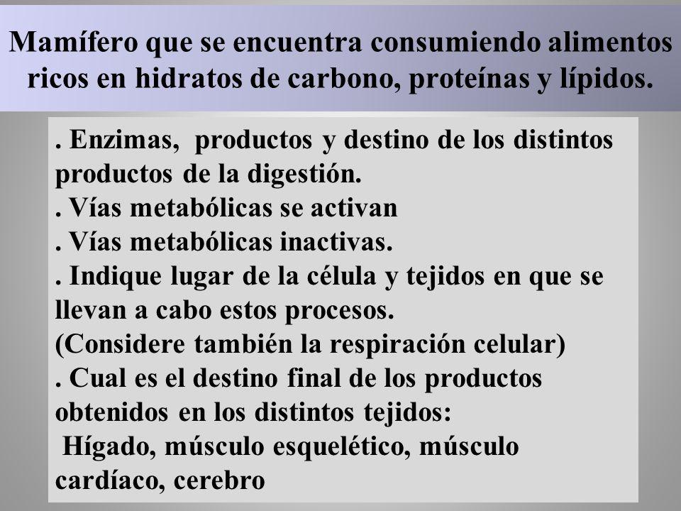 Mamífero que se encuentra consumiendo alimentos ricos en hidratos de carbono, proteínas y lípidos.