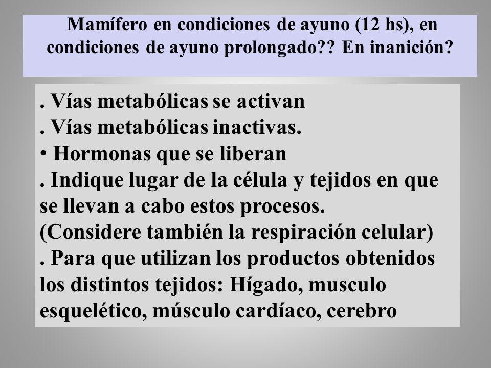 . Vías metabólicas se activan . Vías metabólicas inactivas.