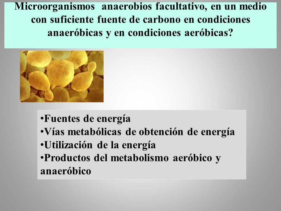 Microorganismos anaerobios facultativo, en un medio con suficiente fuente de carbono en condiciones anaeróbicas y en condiciones aeróbicas