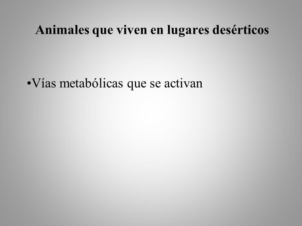 Animales que viven en lugares desérticos