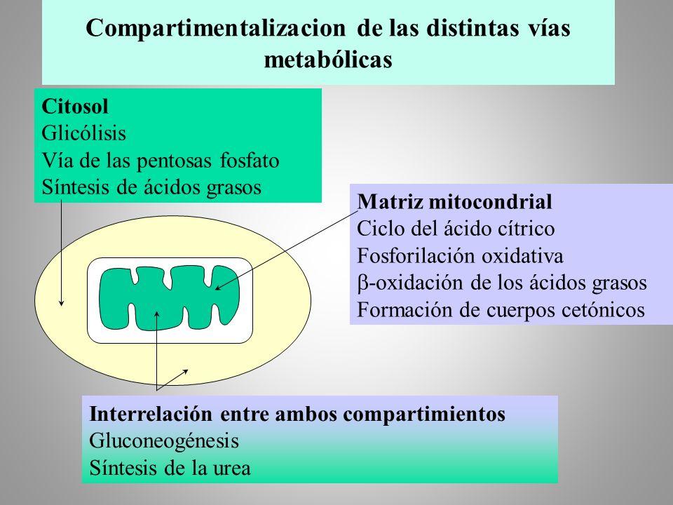 Compartimentalizacion de las distintas vías metabólicas