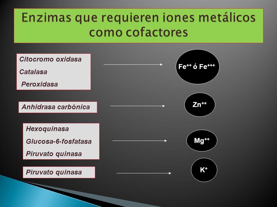 Enzimas que requieren iones metálicos como cofactores