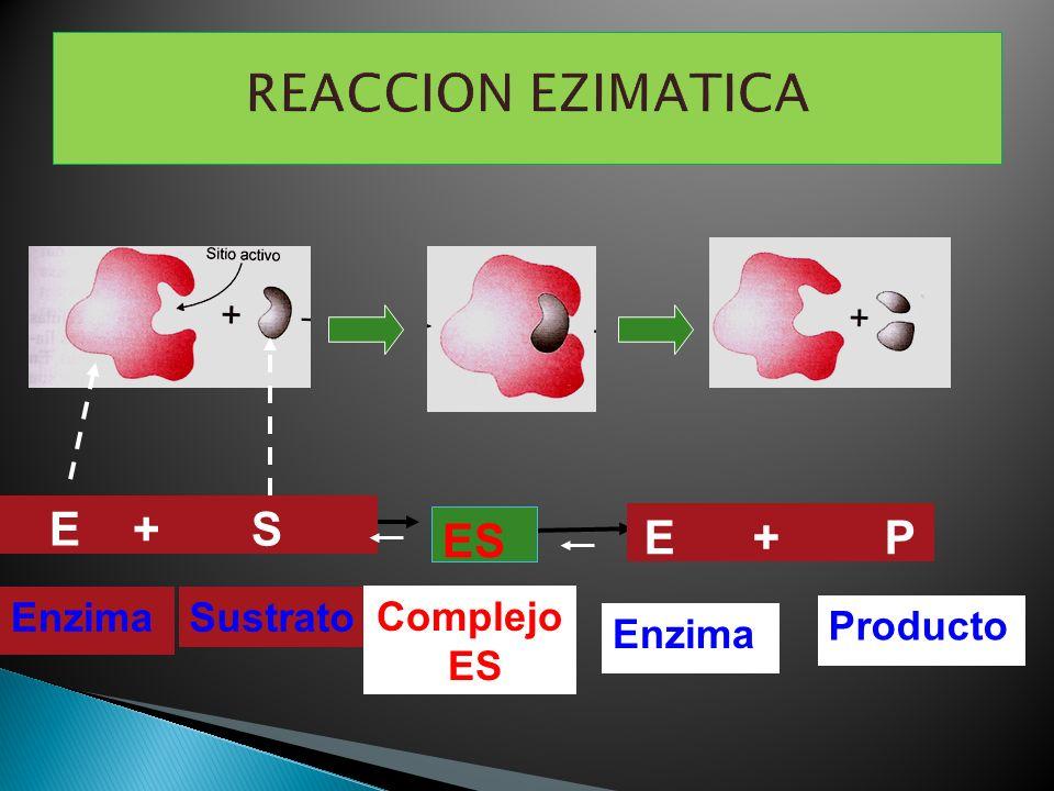 REACCION EZIMATICA E + S E + P Sustrato Enzima Complejo ES Producto