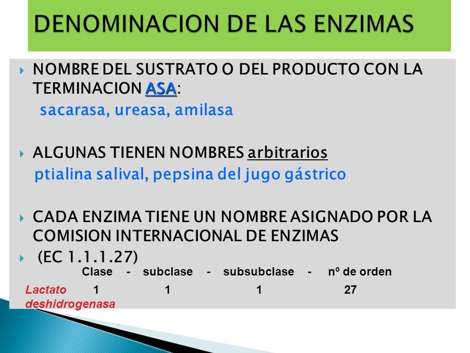DENOMINACION DE LAS ENZIMAS