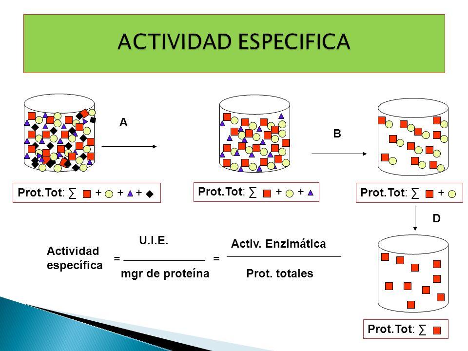 ACTIVIDAD ESPECIFICA A B + Prot.Tot: ∑ + Prot.Tot: ∑ + Prot.Tot: ∑ D