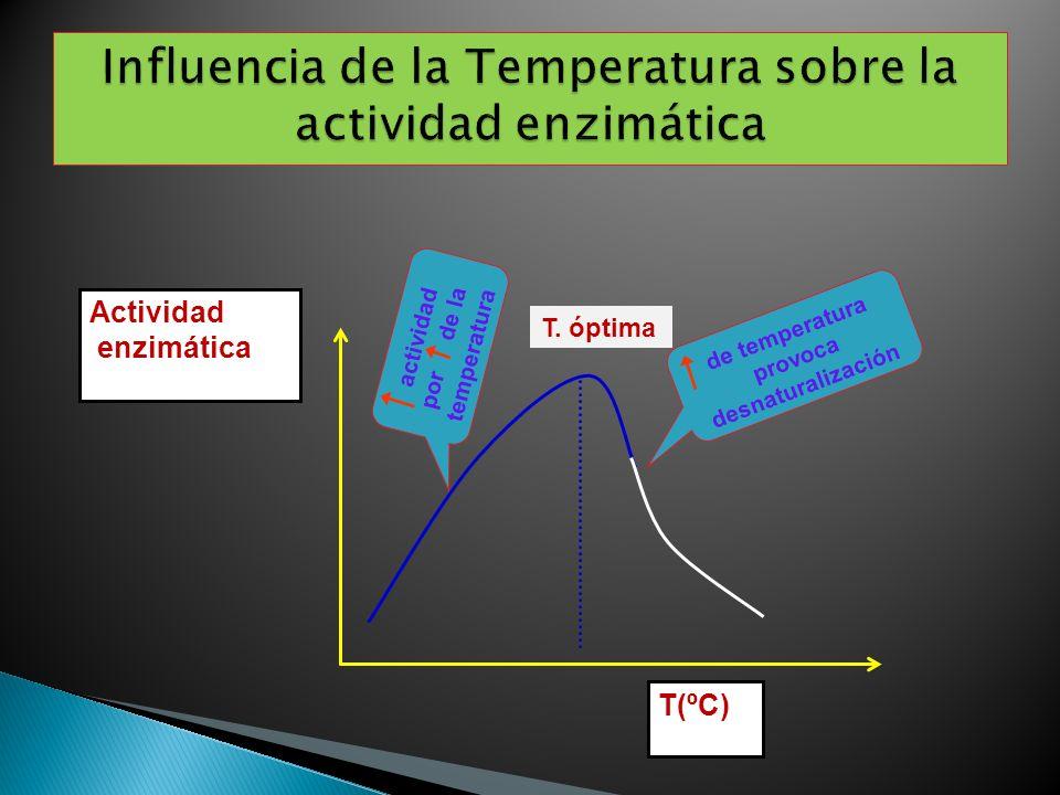 Influencia de la Temperatura sobre la actividad enzimática