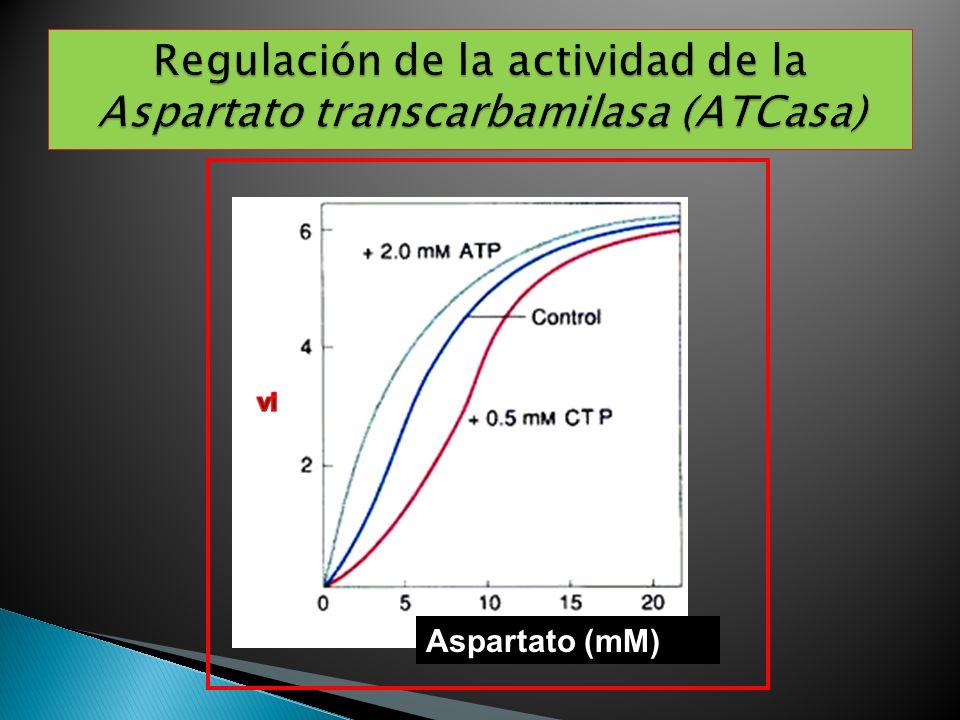 Regulación de la actividad de la Aspartato transcarbamilasa (ATCasa)