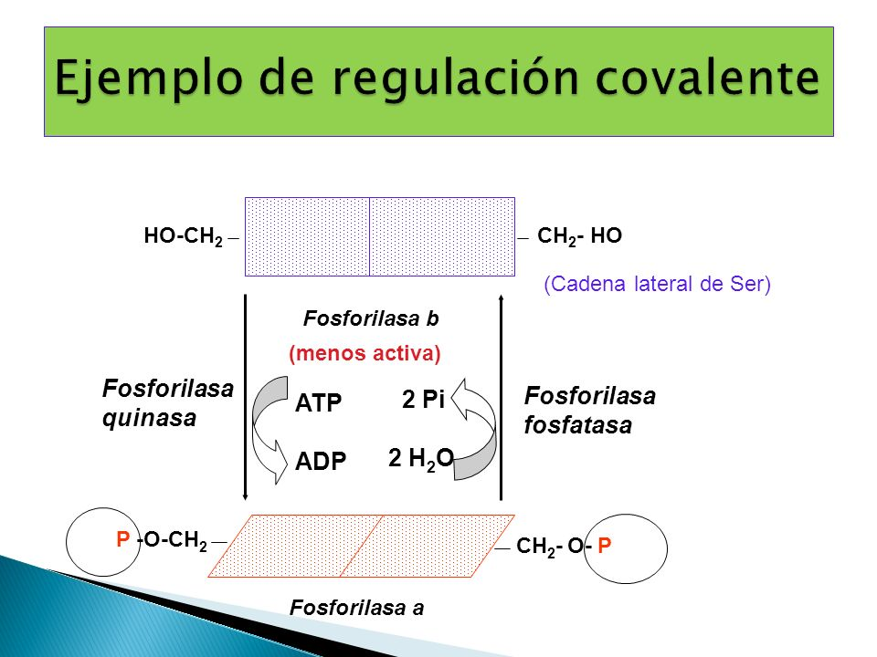Ejemplo de regulación covalente