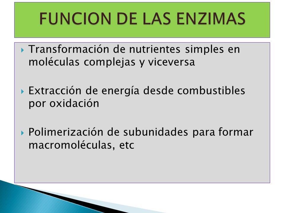 FUNCION DE LAS ENZIMAS Transformación de nutrientes simples en moléculas complejas y viceversa.