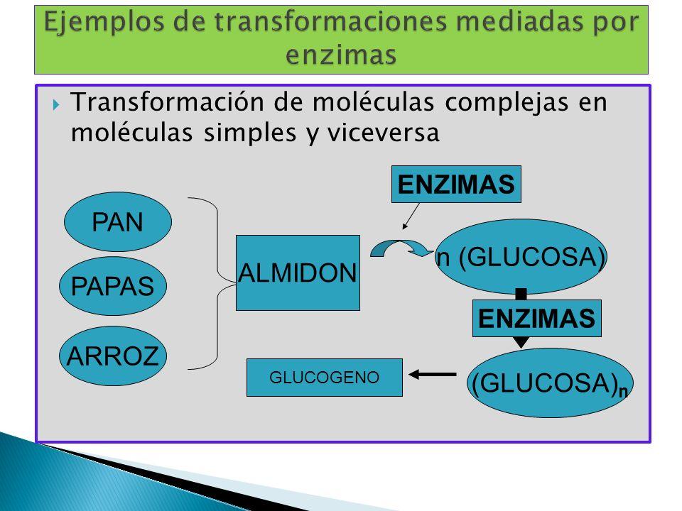 Ejemplos de transformaciones mediadas por enzimas
