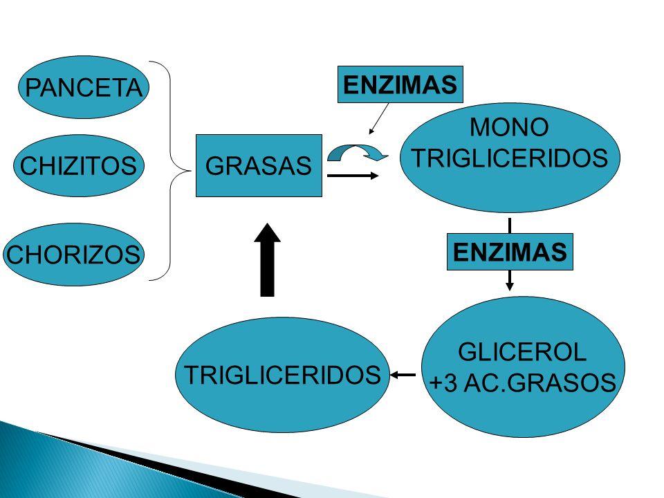 PANCETA ENZIMAS. MONO. TRIGLICERIDOS. CHIZITOS. GRASAS. CHORIZOS. ENZIMAS. GLICEROL. +3 AC.GRASOS.