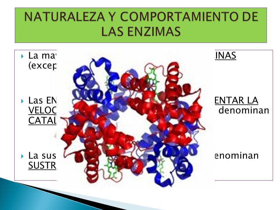 NATURALEZA Y COMPORTAMIENTO DE LAS ENZIMAS