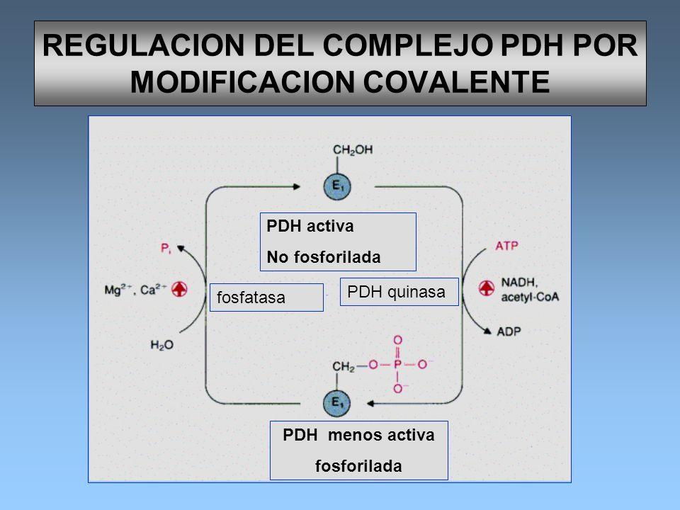 REGULACION DEL COMPLEJO PDH POR MODIFICACION COVALENTE